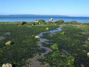Seahurst-Beach-Low-Tide-9LO